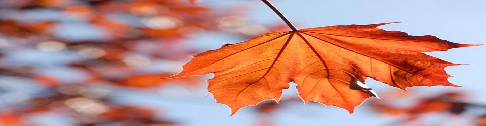 leaf_7122cnp-1